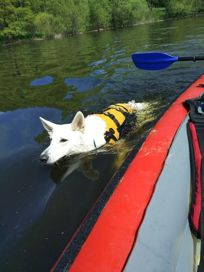 Немножечко солнечного лета и плавучего пса