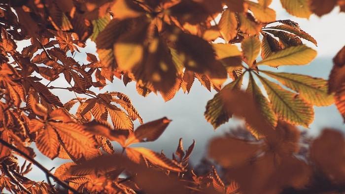 Осень Осень, Санкт-Петербург, Фотография, Длиннопост