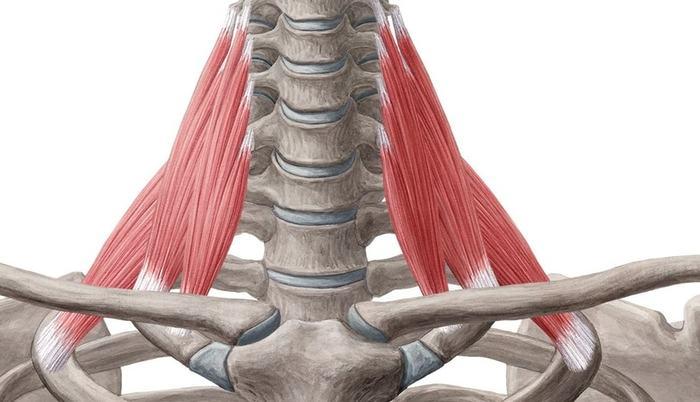 Онемение рук причины Массаж, Шейно-Воротниковая зона, Лестничная мышца