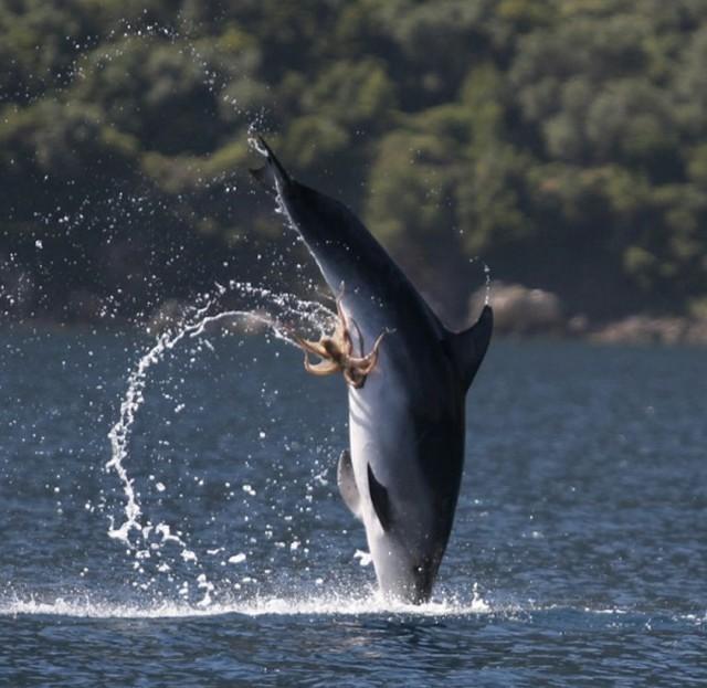 Минет дельфина