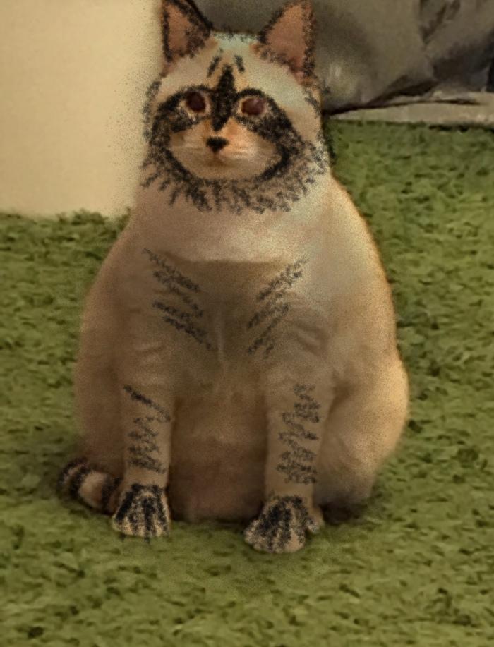 3 класс рассказ о кошке с переводом на русский кто как зовут как выглядит какой характер что умеет делать чем любит заниматься