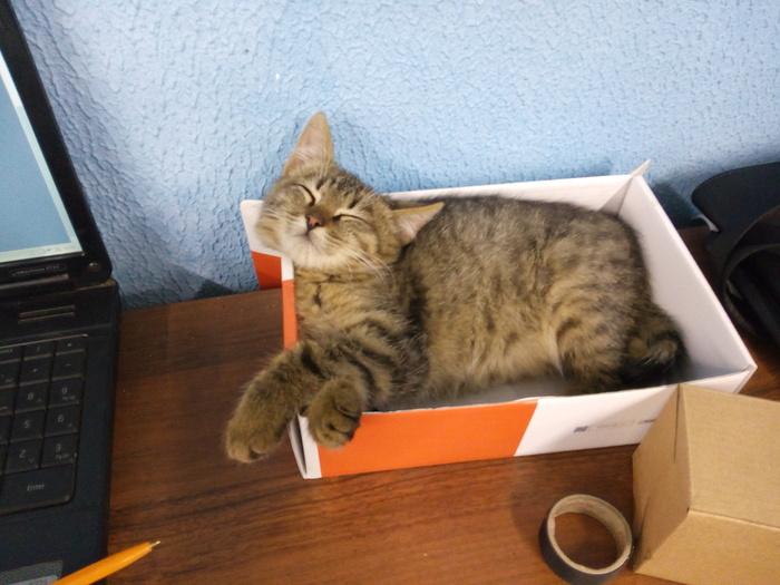 Кот не ест только из рук