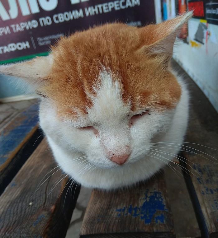 Коты и остановки Кот, Сонный, Длиннопост