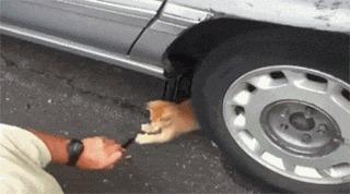 Дядя, дай я помогу) Кот, Помощник, Автомобилисты, Юмор, Гифка