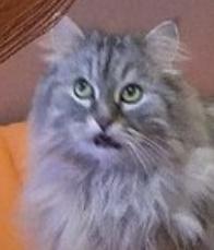 Кот не оценил Кот, Букет, Хз