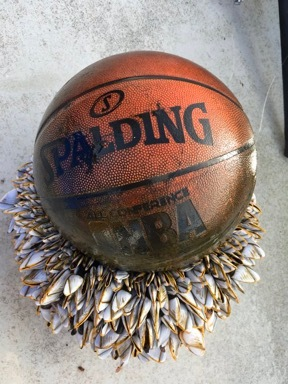 Мячик в зaдницу
