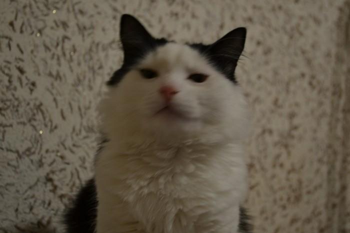 Когда пытаешься сфотографировать кота... Кот, Фотография, Кривые руки, Чукча не фотограф, Длиннопост