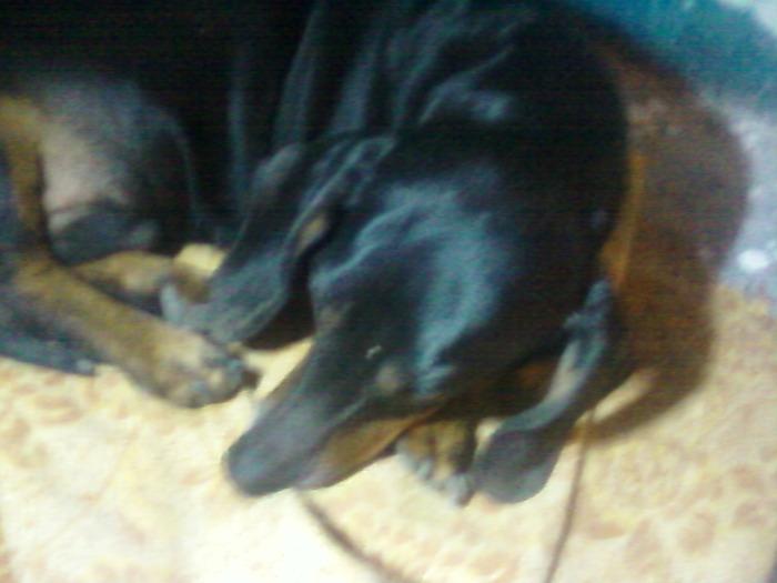 Помощь собаке. Взываю к Силе Пикабу Собака, Помощь животным, Помощь, Волонтерство, Челябинск