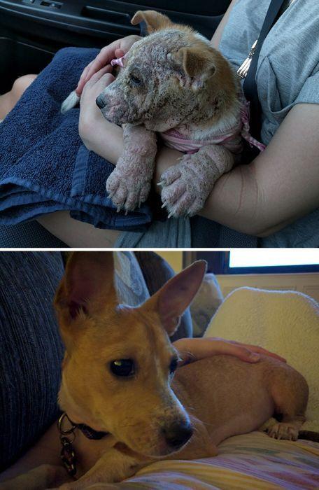 Знакомьтесь, это Мила. В 3 месяца у неё была ужаснейшая инфекция кожи и пневмония, но она смогла выжить Собака, Жизнь, Слезы, Пневмония, Жалко, Инфекция, Жаль