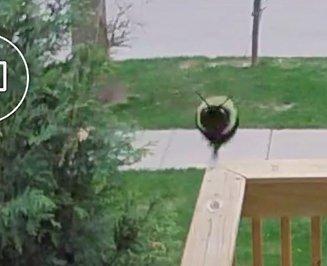 Мне пришло уведомление с камеры наблюдения о том, что замечено движение у входной двери Камера, Найдено животное, Фотография, Смешное, Пчелы, Движение