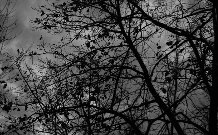 Вечернее осеннее пасмурное Осень, Пасмурно, Начинающий фотограф
