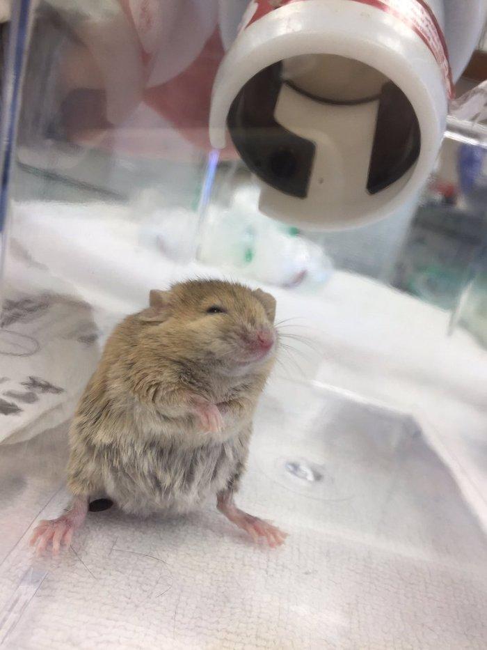 Наша мышка трахается