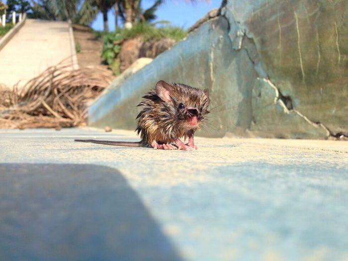 Эта прекрасная история спасения произошла в Боливии.. Мышь, Ящерица, Боливия, Доброта, Спасение, Длиннопост