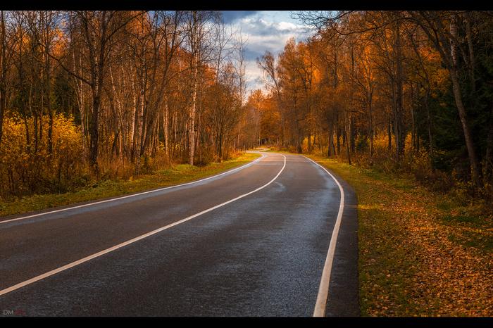 Дорожки. Осень, Дорога, Лес, Поле, Дача, Новая Москва, Московская область, Длиннопост