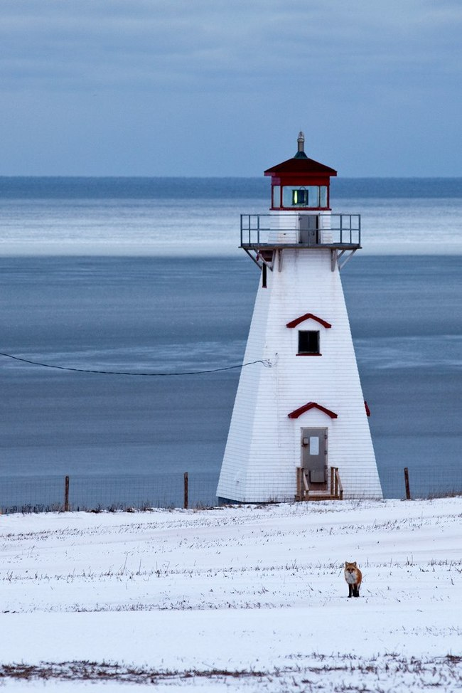 Рыжий смотритель маяка