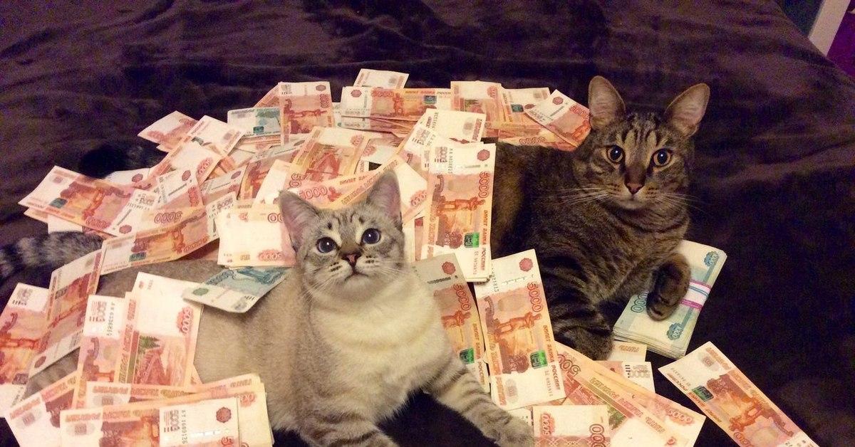 Картинка кот с деньгами