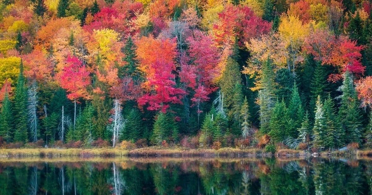 Картинки разноцветной осени