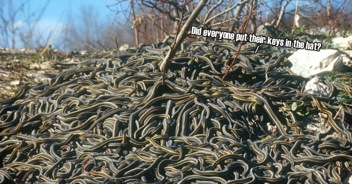 виду фото огромные кучи змей случае экстренной необходимости