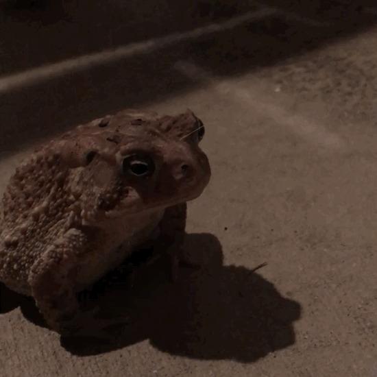 Мистер жаба