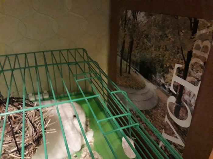 Моя девушка повесила нашему кролику плакатик, чтобы он не смотрел на голую стенку шкафа.