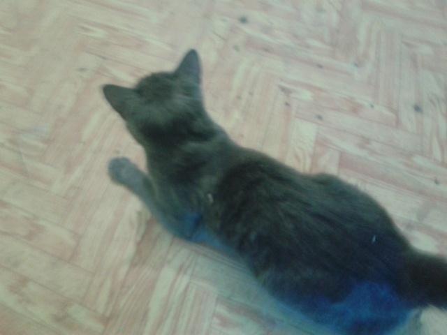 Нашелся кот Кот, Потерялся кот, Мегион