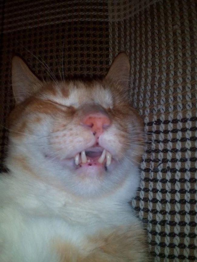 """""""Я сказала себе, что никогда и никого больше не возьму!"""" Но случился форс-мажор… кот, спасение животных, не мое, животные, добрые дела, добрые люди, помощь, длиннопост"""
