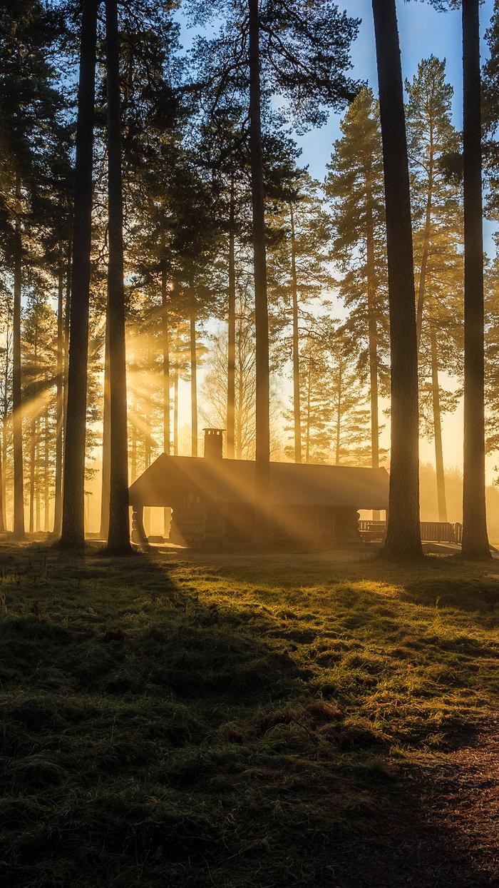В лесу Лес, Поход, Кустарник, Красивые места, Обои на телефон, Длиннопост