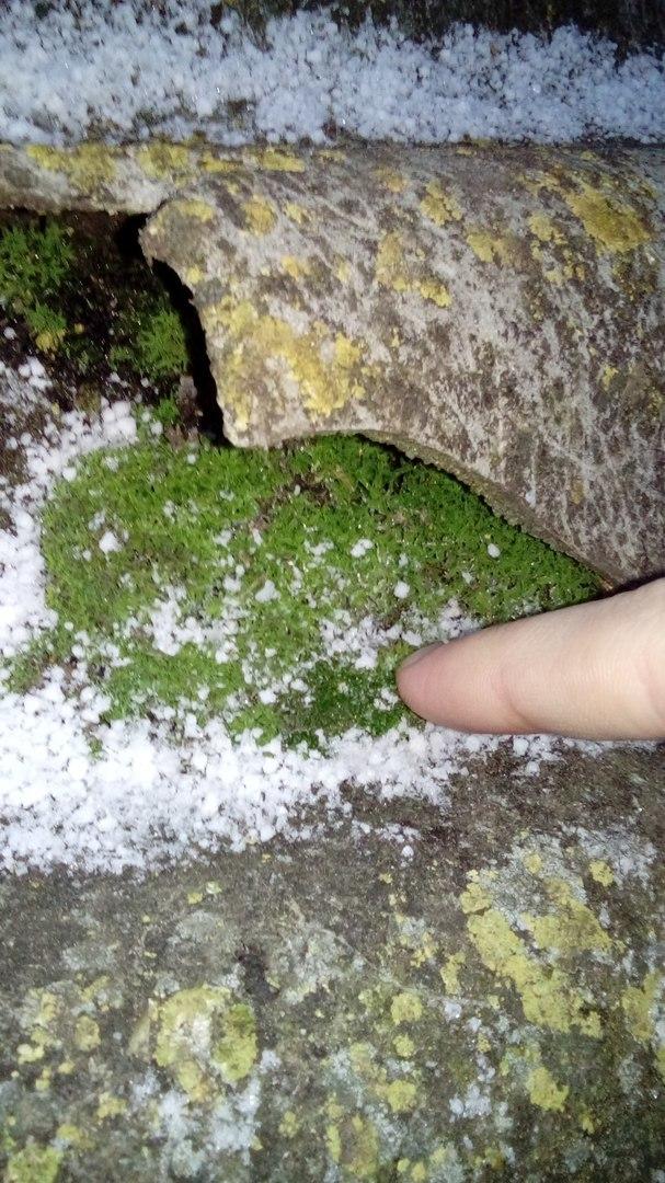 Что это? Красивая зимняя пещера с чуть подмерзшей растительностью? Фотография, Фото на тапок, Фотоприкол