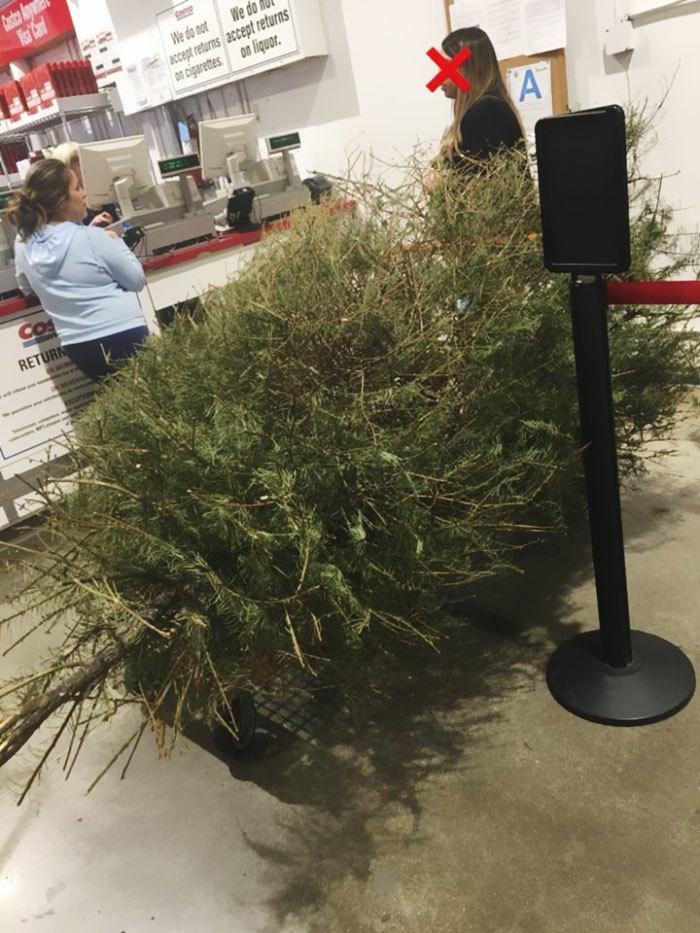 Женщина возвратила ёлку после праздников, потому что та высохла! Ёлка, Магазин, Возврат, Новости, Длиннопост