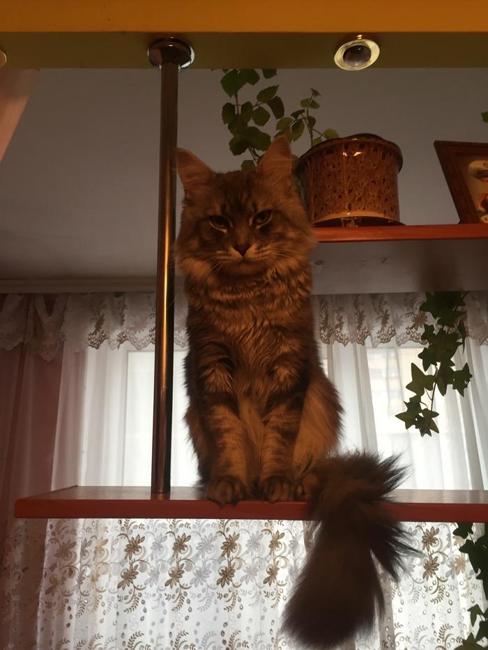 Кошатники , нужен совет! Помощь, Ветеринар, Кот, Дружба, Длиннопост