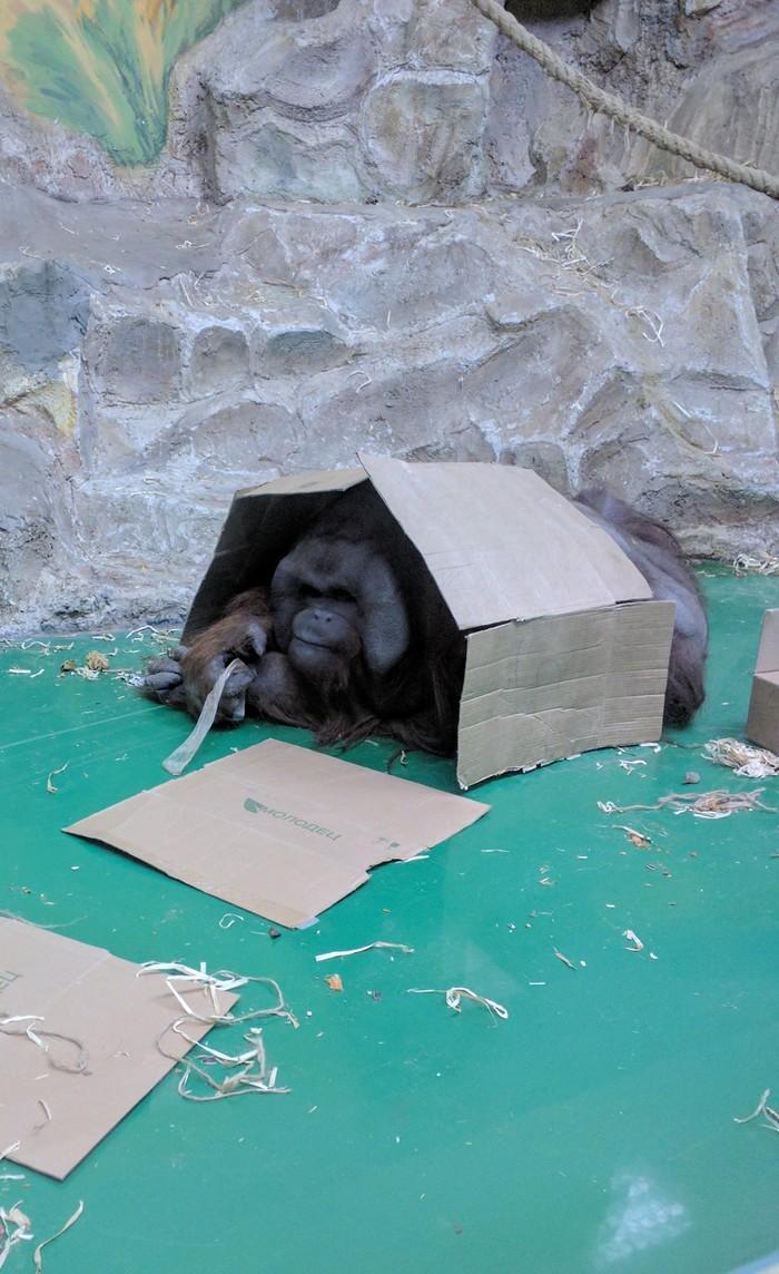 Когда съехал от родителей Животные, Фотография, Обезьяна, Новосибирский зоопарк, Жилье, Длиннопост