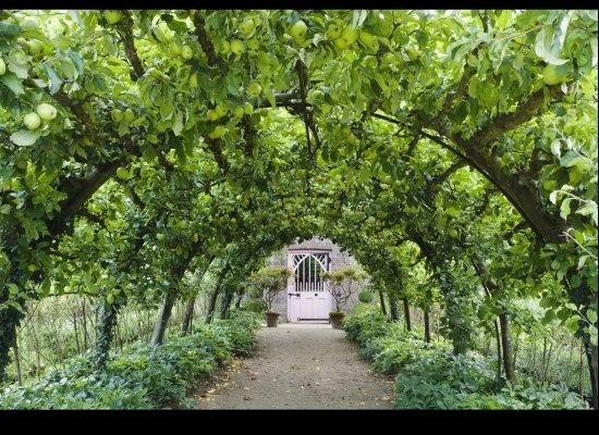 Плодовые деревья на шпалерах Сад, Плодовые деревья, Шпалерные деревья, Декор, Просто очень длиннопост, Метод, Длиннопост