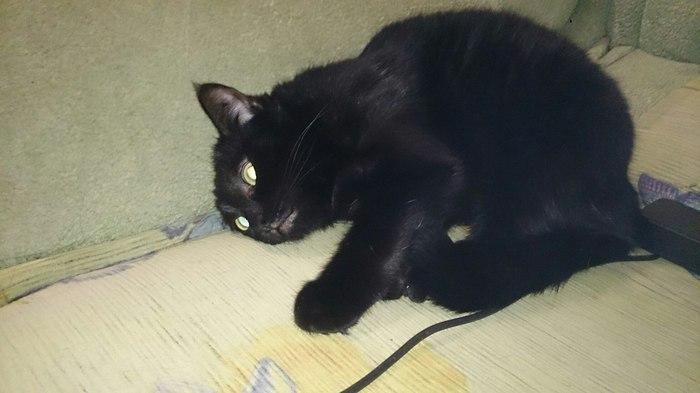 Кошкин тлен Кот, Безысходность, Черная, Котомафия