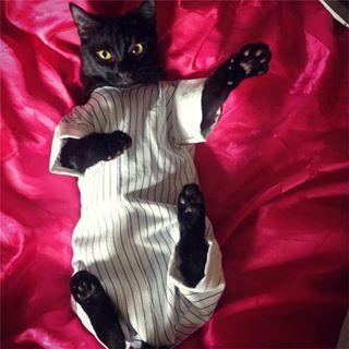 Кошкина пижама Кот, Пижама, Чудовище, Зига