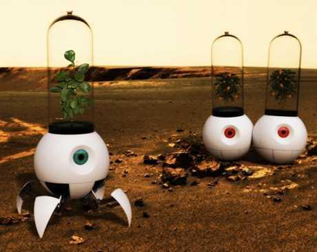 Ученые вывели овощи, которые можно будет выращивать на Марсе Agronews, Ученые, Марс, Ирландия, Овощи, Культура, Огурцы, Помидор