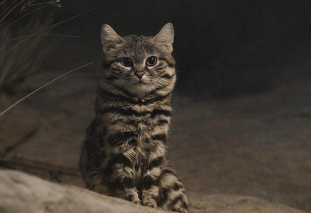 Лучший убийца на планете Животные, Хищник, Кот