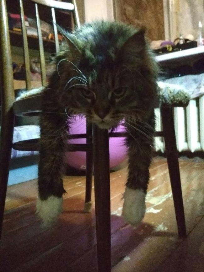 Все хвастаются своми котэ. чем я хуже? тлен и уныние в исполнении Шайли.