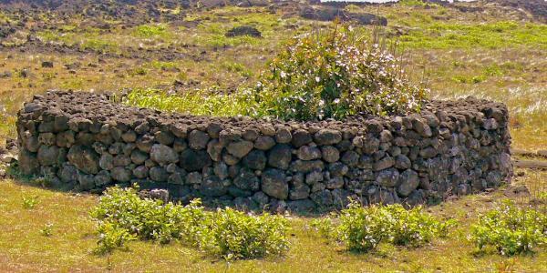 Каменные сады острова Пасхи Остров Пасхи, Технологии, Сельское хозяйство, Древние технологии, Длиннопост
