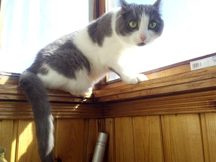 Кошки, которые никому не нужны, ищут дом. Кошки в добрые руки, Кот, Длиннопост, Помощь животным, В добрые руки, Екатеринбург