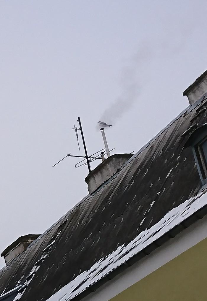 Просто чайка просто греется Зима, Холодно, Чайки, Длиннопост
