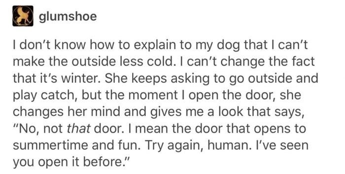 Зима. Собака, Зима, Холод, Смешное, Животные, Ifunny