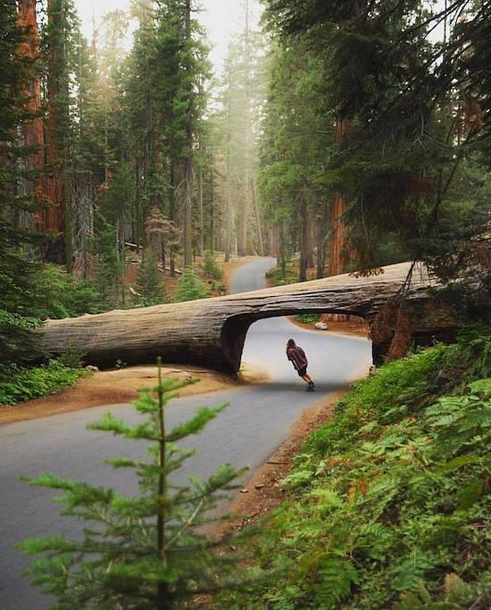 Арка из ствола дерева на дороге