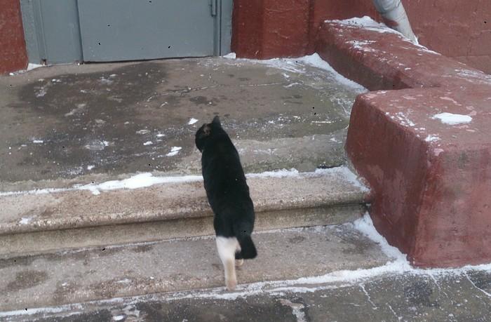 Пушистый котейка Кот, Улица, Кость широкая, Москва