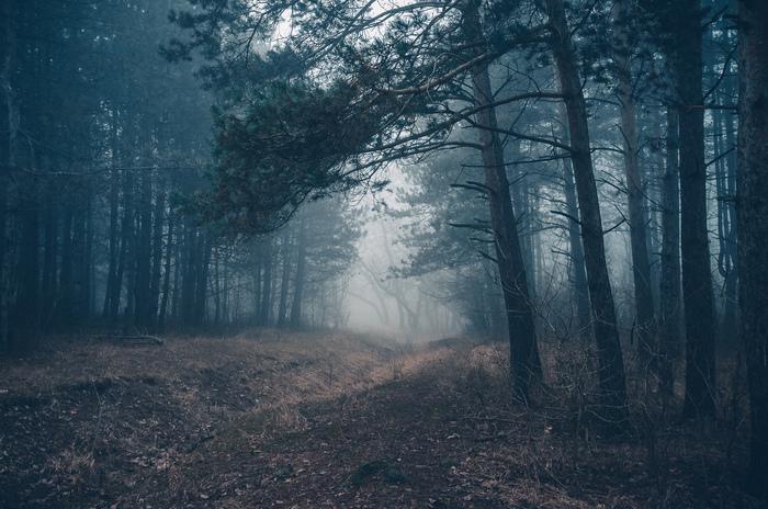 Туманы в январе Крымск, Фотография, Туман, Январь, Лес, Природа, Россия, Fujifilm