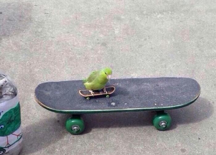 Маленький скейтбордист