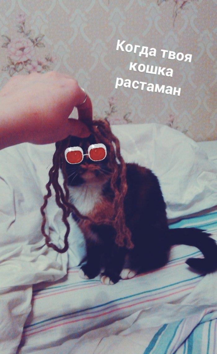 Кошка Мариванна Кот, Растаман, Ничего лишнего в тегах