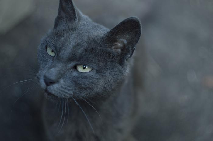 Кыця Фотография, Кот, Серая кошка, Серый