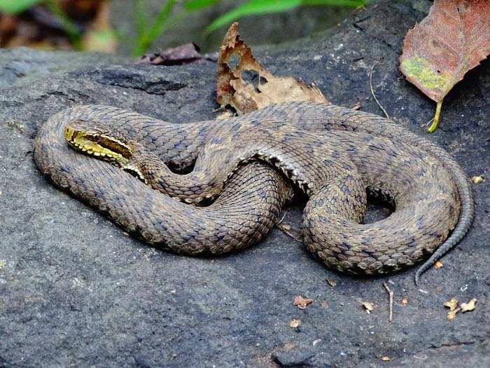 там отдыхают змеи амурской области фото и название хотят