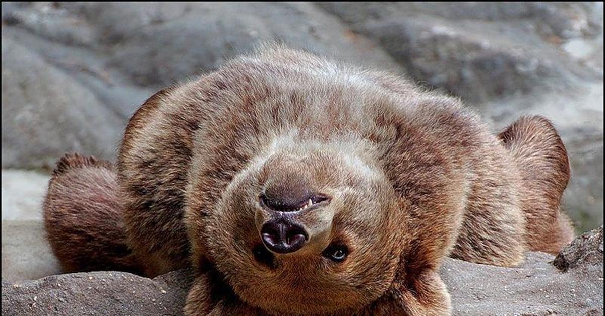 Медвежонок картинки приколы
