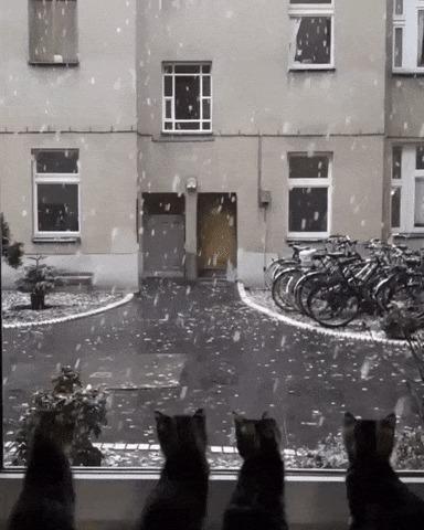 Их первый снег